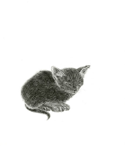 Very Shy Kitten a Shy Little Kitten is Dozing